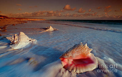 Conch Shell On Beach Art Print by Novastock and Photo Researchers