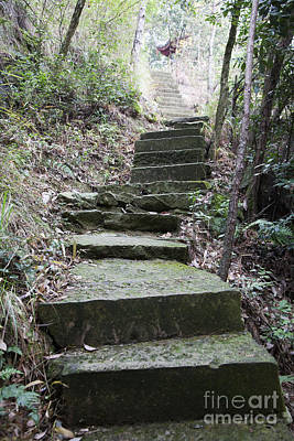 Cement Walkway Photograph - Concrete Stairs In The Woods by Shannon Fagan