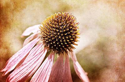 Cone Flower Art Print by Margaret Hormann Bfa