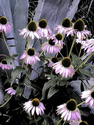 Photograph - Coneflowers In Abstract by Beth Akerman