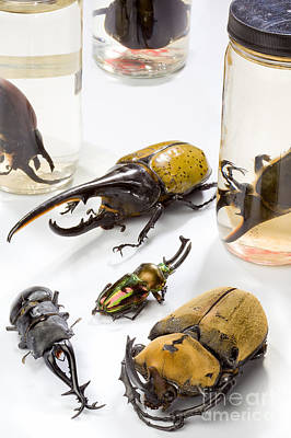 Confiscated Beetles Print by Science Source