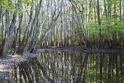 Photograph - Congaree National Park by Pierre Leclerc Photography