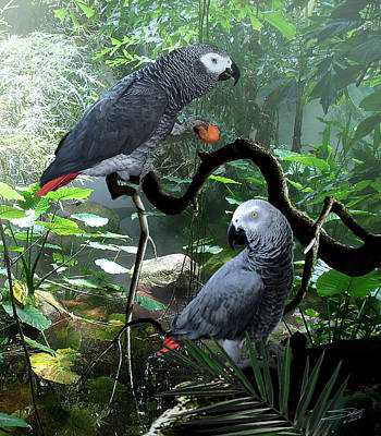 Digital Art - Congo African Grey Parrots by IM Spadecaller