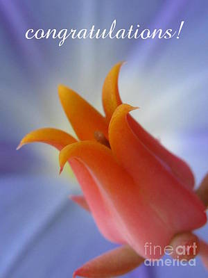 Bulb Photograph - Congratualtions by Tina Marie