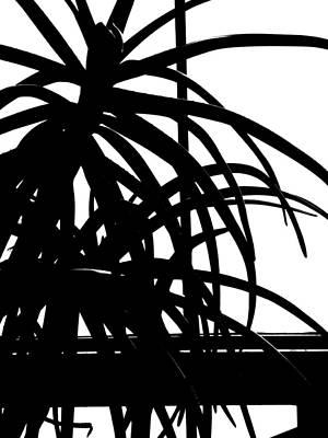 Photograph - Conservatory Abstraction by Beth Akerman