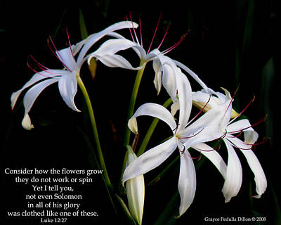 Photograph - Consider The Lilies by Grace Dillon