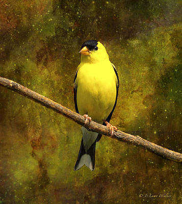 Digital Art - Contemplating Goldfinch by J Larry Walker