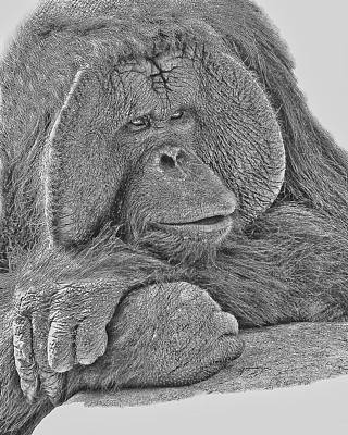 Orangutan Digital Art - Contemplation by Larry Linton