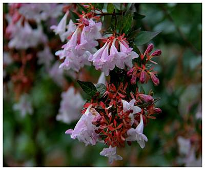Photograph - Contrasting Pink And Red by Frank Wickham