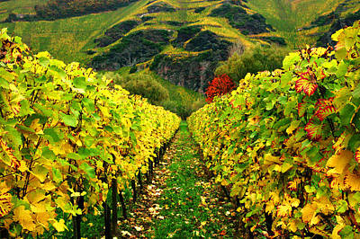 Photograph - Converging Vines-mosel by John Galbo