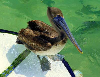 Cool Footed Pelican Art Print by Karen Wiles