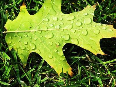 Cool Morning Dew Art Print