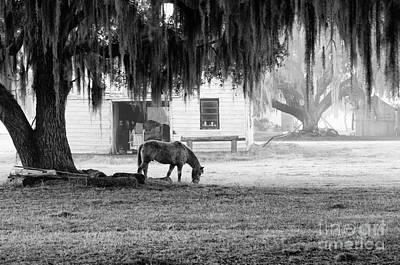 Photograph - Coosaw - Grazing Free by Scott Hansen