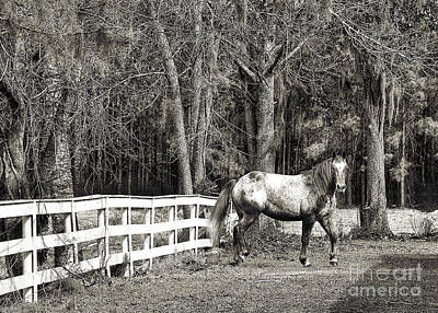 Photograph - Coosaw - Outside The Fence Black And Wite by Scott Hansen