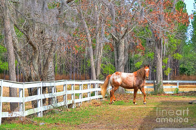 Broodmare Photograph - Coosaw - Outside The Fence by Scott Hansen