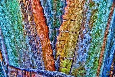 Photograph - Copernicia Fallaense  by Manny Lorenzo