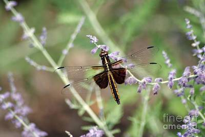 Photograph - Copper Dragon Fly by Living Color Photography Lorraine Lynch