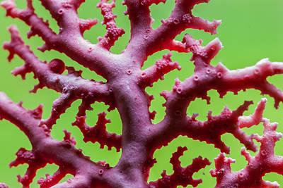 Photograph - Coral Abrasion by Gene Hilton