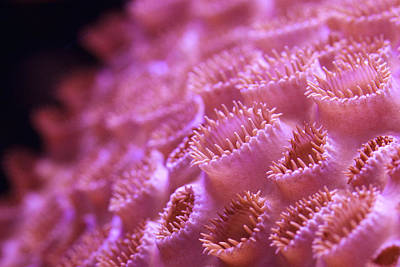 Photograph - Coral Close-up II by Adam Pender