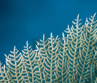 Photograph - Coral Detail by Jean Noren