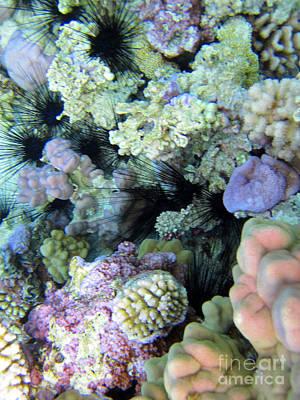 Photograph - Coral Gardens by Tina Broccoli
