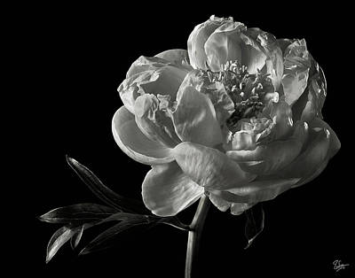 Print featuring the photograph Coral Peony In Black And White by Endre Balogh