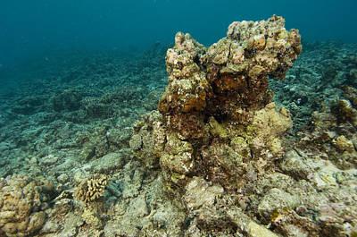 Wildlife Disasters Photograph - Coral Reef Devastation by Matthew Oldfield