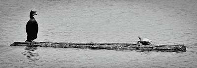 Photograph - Cormorant And Turtle by Kevin Munro