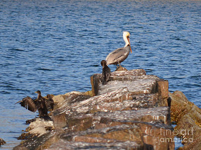 Photograph - Cormorants And Pelican by Donna Brown