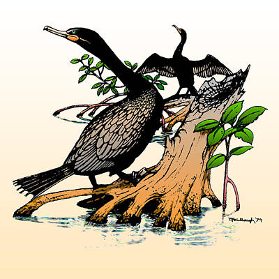Drawing - Cormorants On Mangrove Stumps Filtered by Duane McCullough