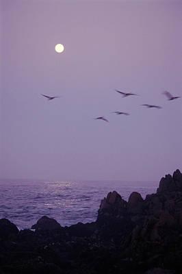 Cormorants (phalacrocoracidae) In Flight, Full Moon, Sunrise, Usa Print by Gary Braasch