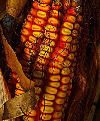 Photograph - Corn  by Chris Berry