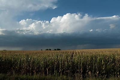 Corn Country Art Print