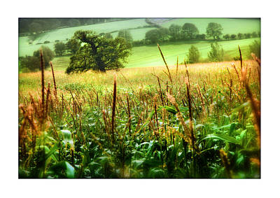 Corn Field Print by Mal Bray