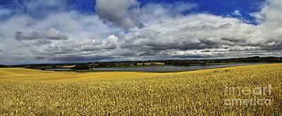 Corn Field Panorama Art Print by Heiko Koehrer-Wagner