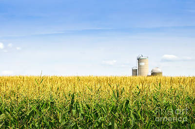 Food And Beverage Photos - Corn field with silos by Elena Elisseeva