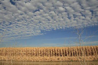 Corn Fields In West Art Print
