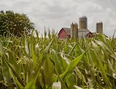 Cornfield Photograph - Corn Is High by Odd Jeppesen