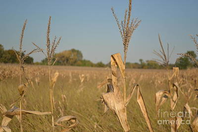 Photograph - Corn  by Justine Gersich