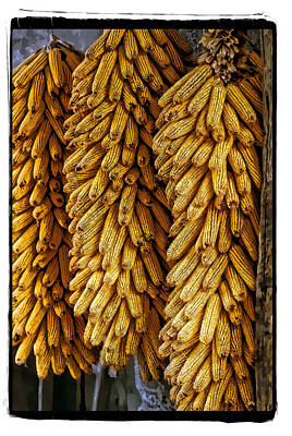 Corn  Art Print by Mauro Celotti