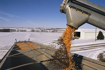 Corn Pours From An Auger Into A Grain Art Print