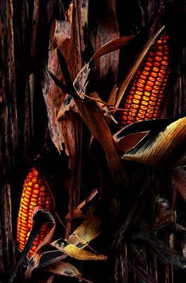 Corn Stalks Art Print by Rachel Christine Nowicki