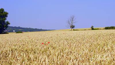 Cornfield With Poppies Original