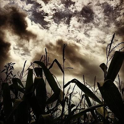 Vineyard Wall Art - Photograph - Cornfields At Sherwood House Vineyards by Arnab Mukherjee