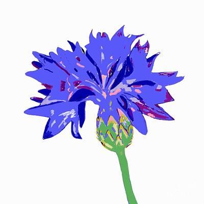 Digital Art - Cornflower by Barbara Moignard