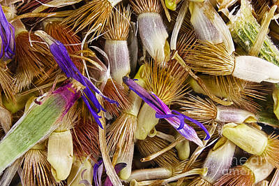 Photograph - Cornflower Seeds by M I Walker