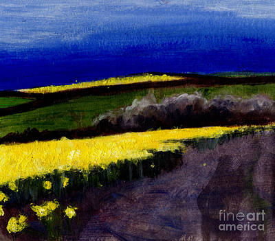 Cornish Daffodil Field 1  Art Print