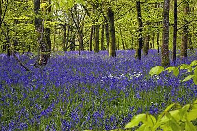 Spring Bulbs Photograph - Cornwall Llanhydrock Gardens by Dr Keith Wheeler