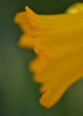 Photograph - Corona by JD Grimes
