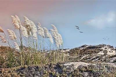 Pampas Grass Photograph - Coronado Island Pampas Grass by Betty LaRue